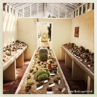 Valencia_Botanic2