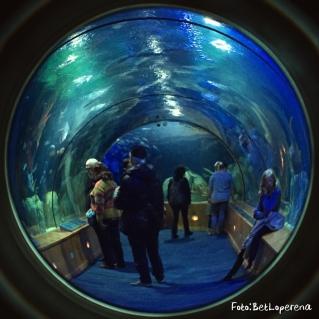 Valencia_Oceanografic